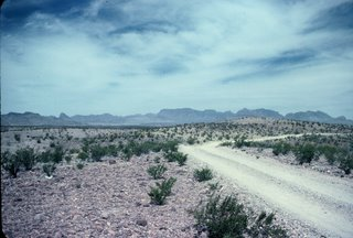Big Bend National Park Desert Road!