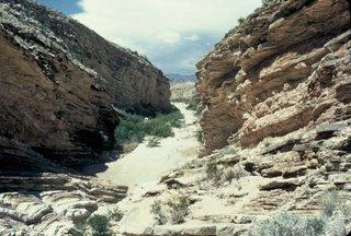 Chihuahuan Desert Scene!
